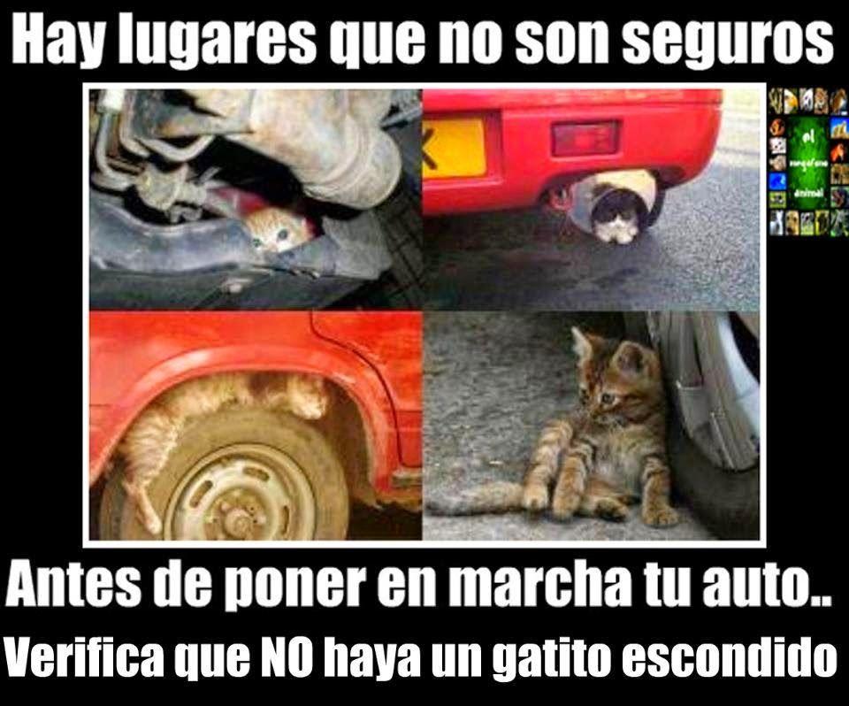 Gato Coche Cartel 4 Vinetas Jpg 960 798 Gato Escondido Gatos Amor Animal