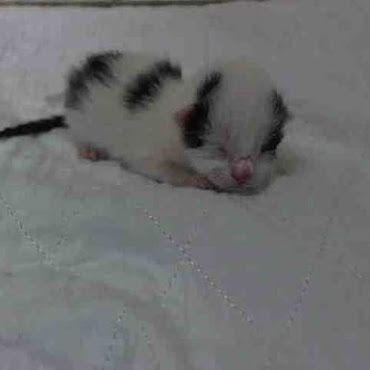 Nyc Acc Shelter Has Hit New Low These 2 Day Old Kittens Their Mama Were Killed Yesterday No Reason Needed You Can Kitten Adoption Animals Cats And Kittens