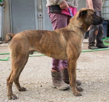 Beto Mischling 1 5 Jahre Vertraglich Hunde Tiervermittlung