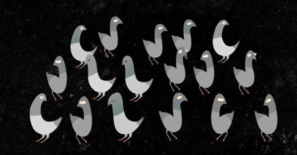 black birds!