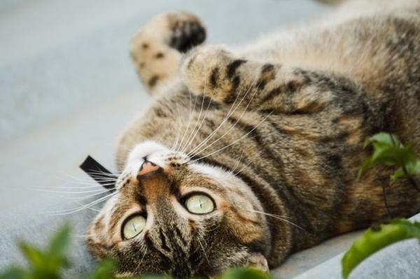 Pourquoi mon chat fait pipi partout dans la maison ? | Gâteries pour chats, Chat, Faire pipi