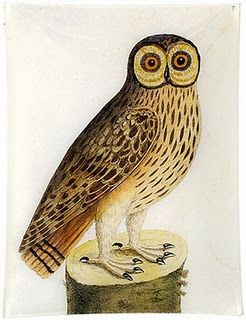 Vintage Owl Illustration Owl Illustration John Derian Decoupage Owl