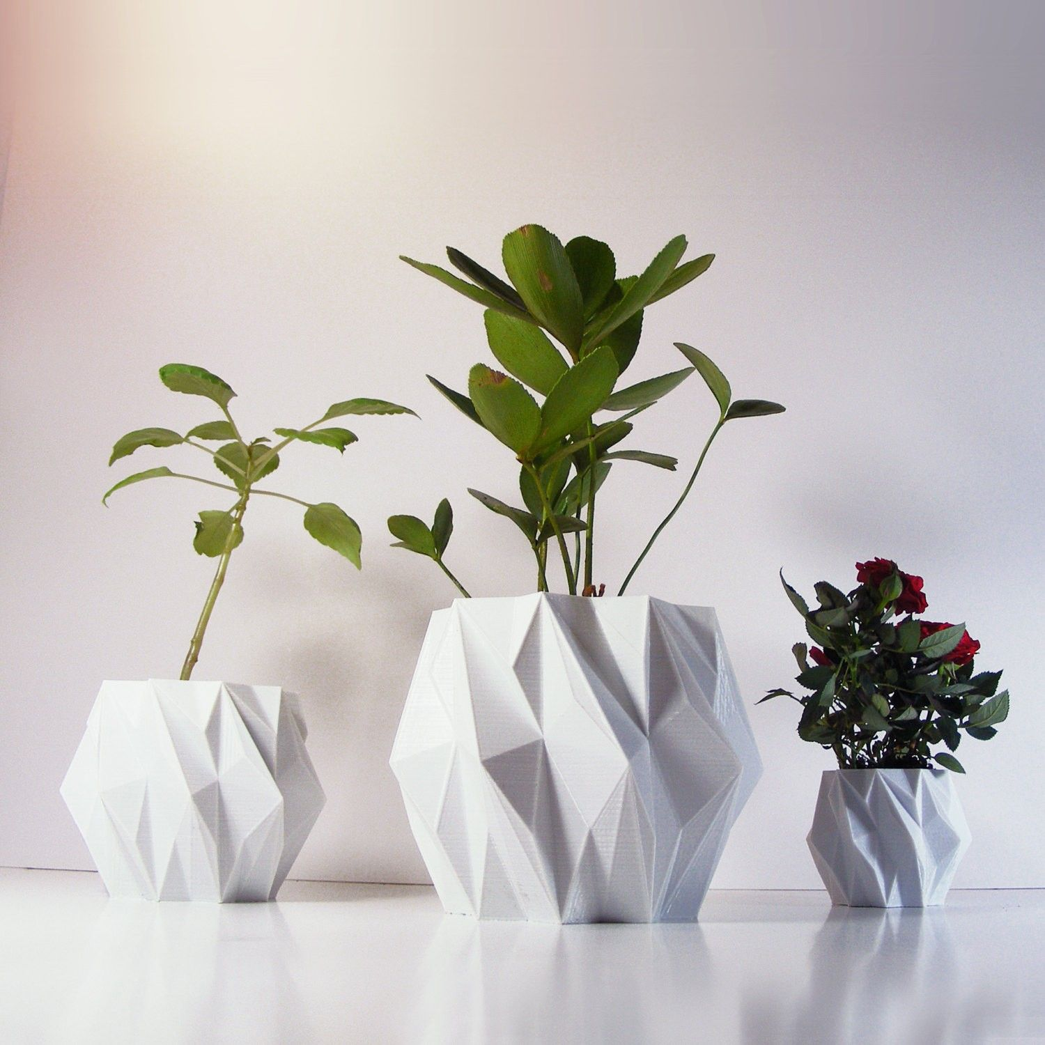 Pin by Nicole Zeng on 绿植 | Pinterest | Plants, 3d and Concrete