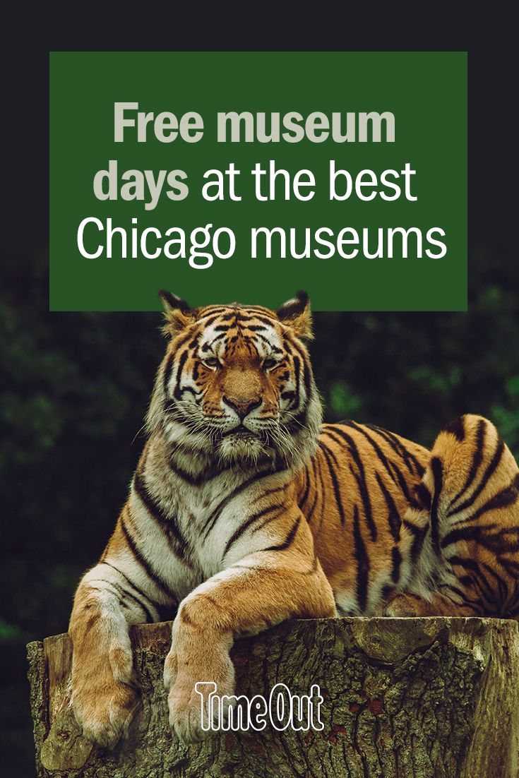 Free museum days at the best Chicago museums in 2019