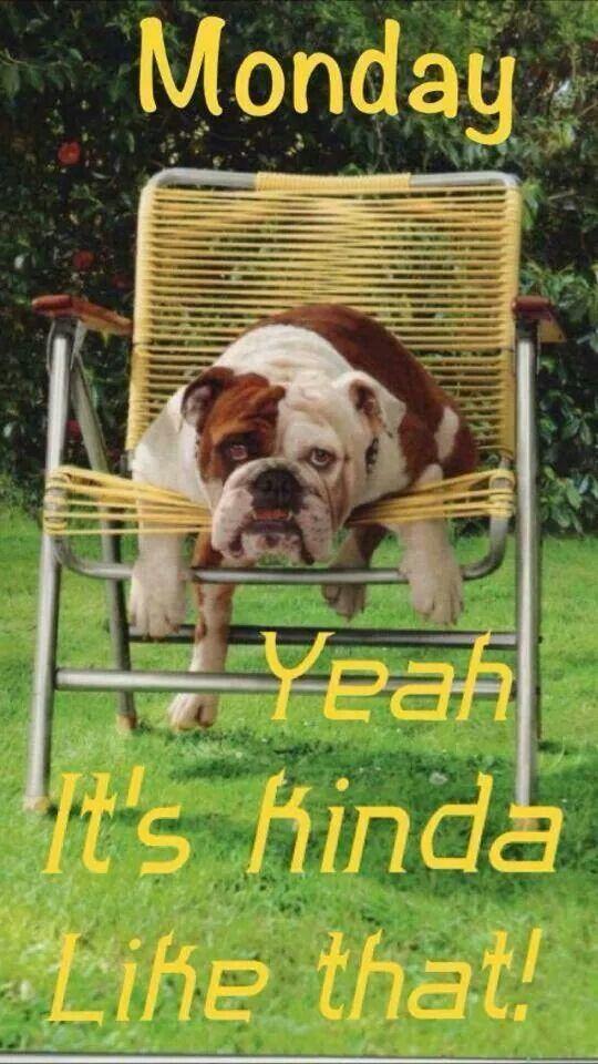 Monday English Bulldog Bulldog Dogs
