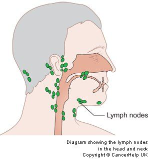 Diagram showing the lymph nodes in the head and neck | My body ...