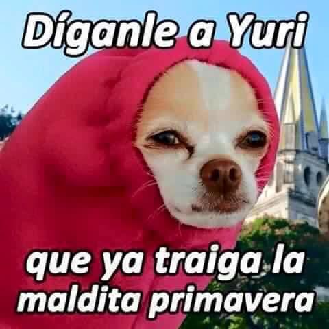 Perro Meme Lo Mas Gracioso Y Nuevo Del Internet Memes Lindos Memes De Frio Memes Espanol Graciosos