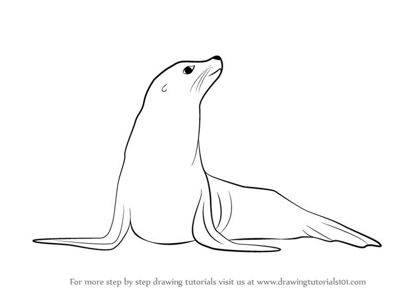 Dibujos De Lobos De Mar Frio Para Dibujar Buscar Con Google Step By Step Drawing Drawings Drawing Tutorial