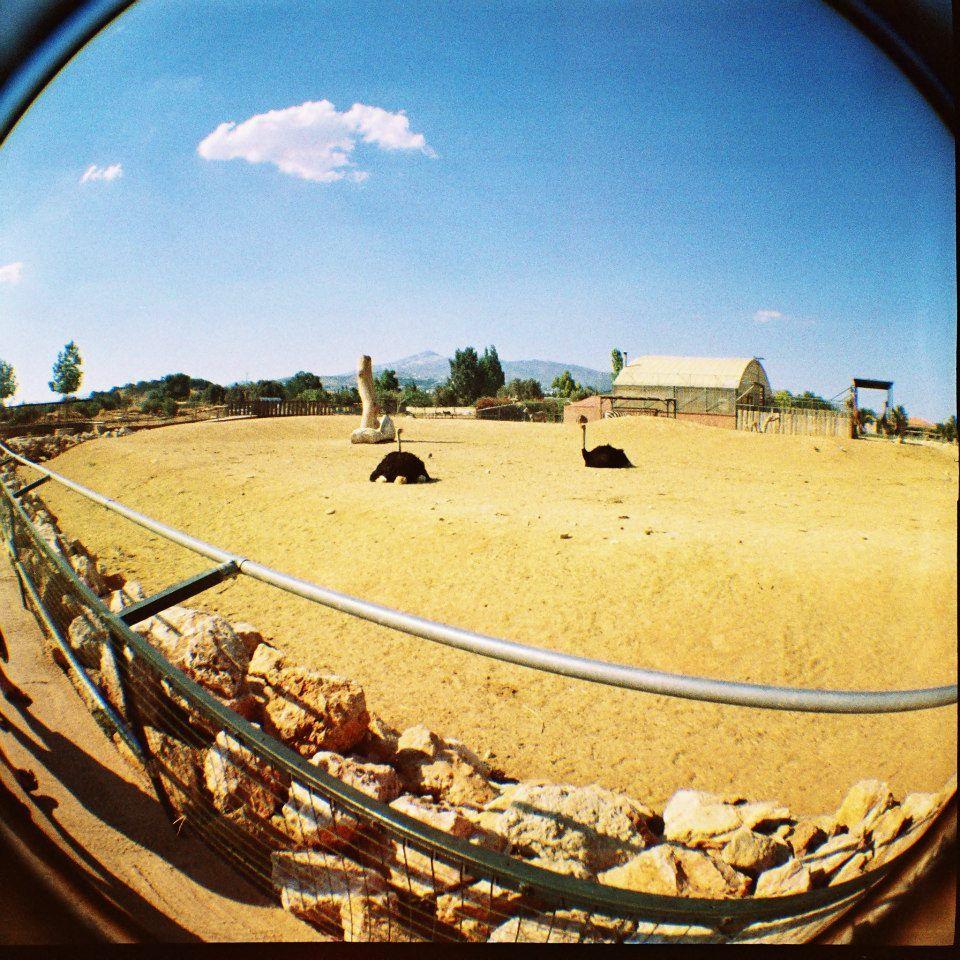 @ greek zoological park