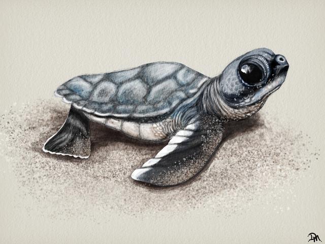 Http 3 Bp Blogspot Com Oevc3laz62e Uizzz45opni Aaaaaaaaai8 V7dwe8tvnii S640 Baby Sea Turtle Png Turtle Tattoo Designs Turtle Drawing Turtle Tattoo