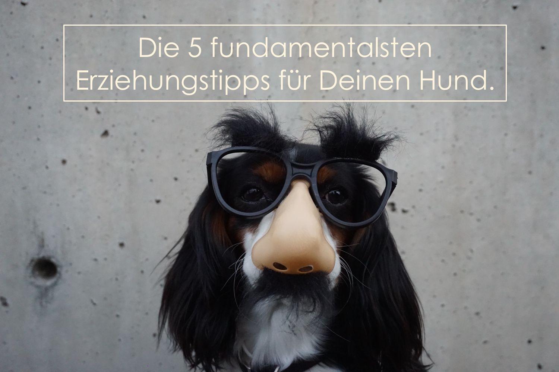 Die 5 Fundamentalsten Erziehungstipps Fur Deinen Hund Hund Witze Hund Funnies Und Hunde