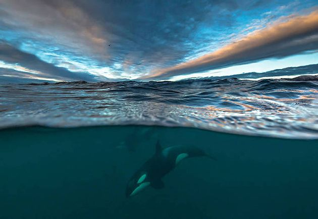 professor captures incredible photos of whales in arctic