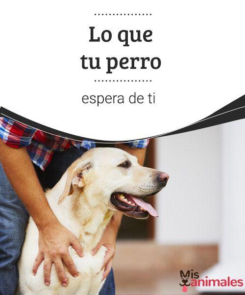 Tipos De Collares De Castigo Para Perros Lo Que Tu Perro Espera De Ti Con Imagenes Perros Salud De Las