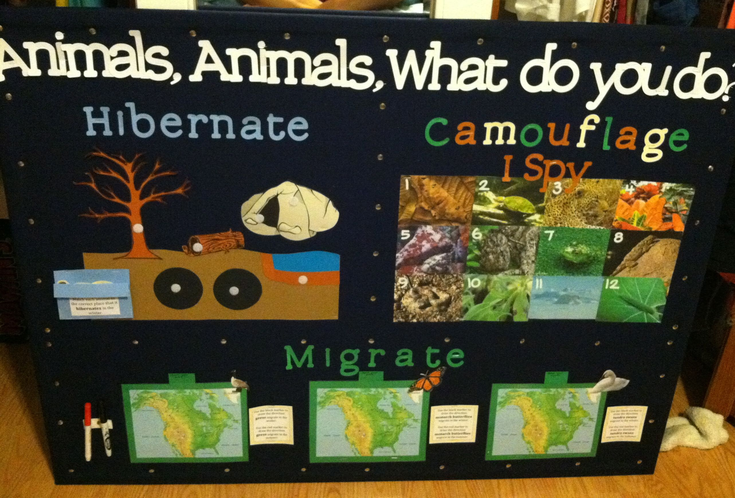 2nd Grade Migration Camouflage Hibernation Interactive Bulletin Board Migration Section Kids Draw A Fun Science First Grade Activities Preschool Science [ 1740 x 2565 Pixel ]