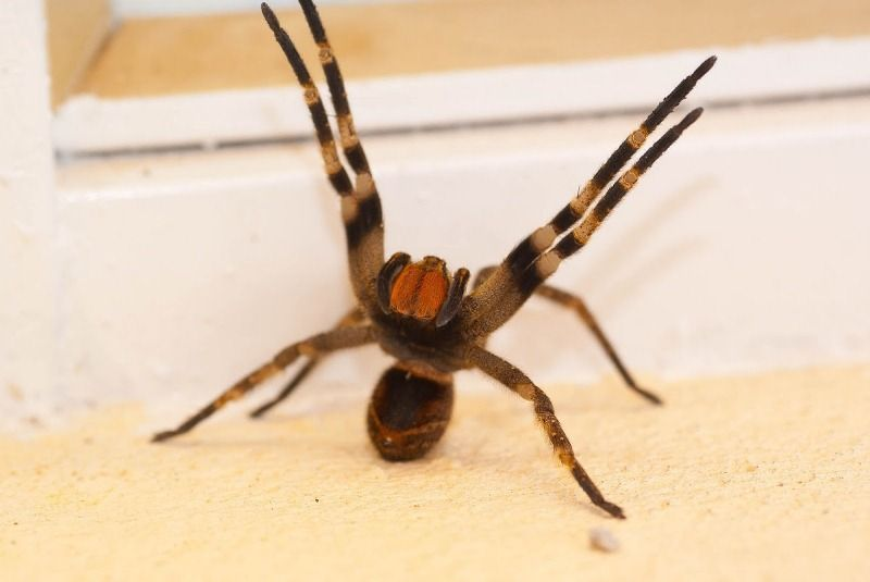 Scary Animals Brazilian Wandering Attacking The Worlds Most Deadliest Animals You Dont Know About