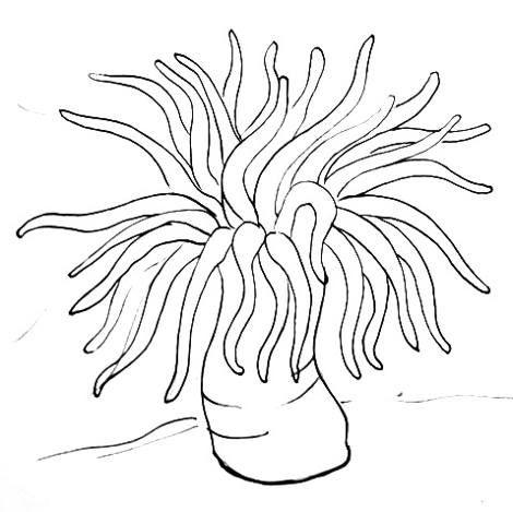 Sea Anemone Drawing For Top Of Sensory Tin Sea Anemone Sea