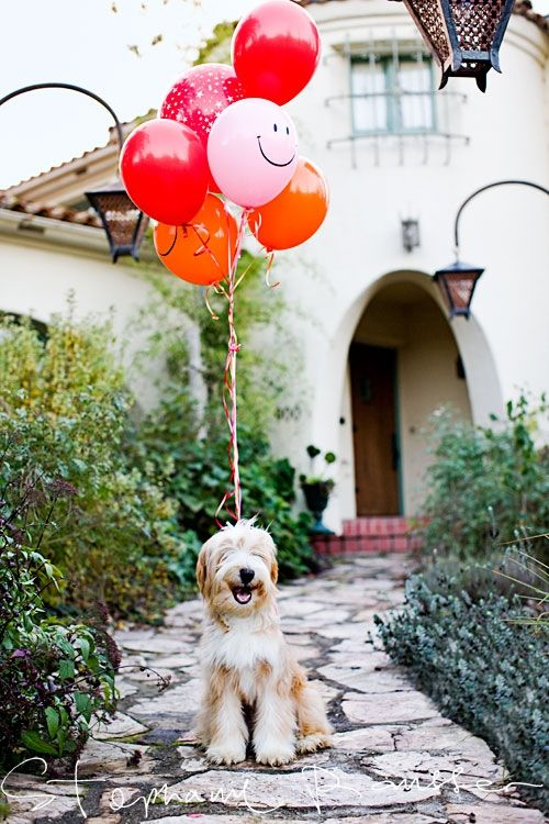 a pup and balloons?  perfect!
