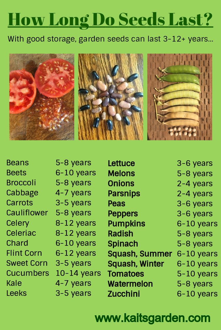 How Long Do Seeds Last Really Home Vegetable Garden Vegetable