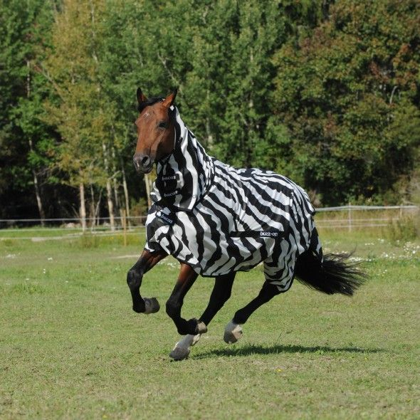 Buzz Off Zebra With Images Fly Rugs Zebra Horses