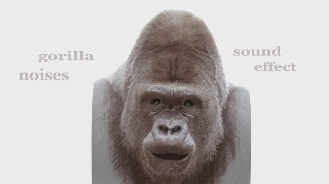 the animalsounds gorilla howling whimpering soundeffect