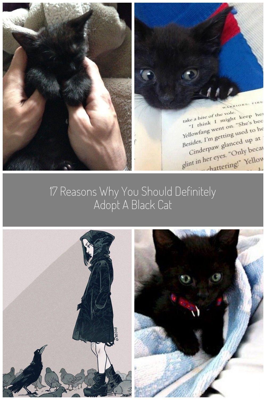 Black Kitten Fluffykittens Black Kitten Black Kittens Black Kitten Kittens Kitten