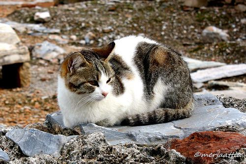 Cat guarding the Prytaneum | Flickr - Photo Sharing!