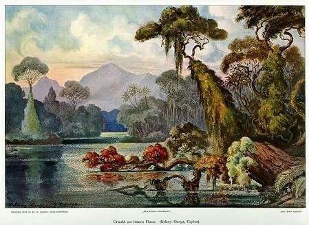 Ceylon jungle image