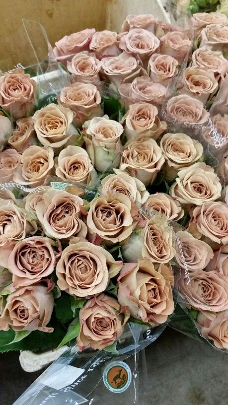 Wedding Bouquets Variety : Cappucino roses taupe brown flowers