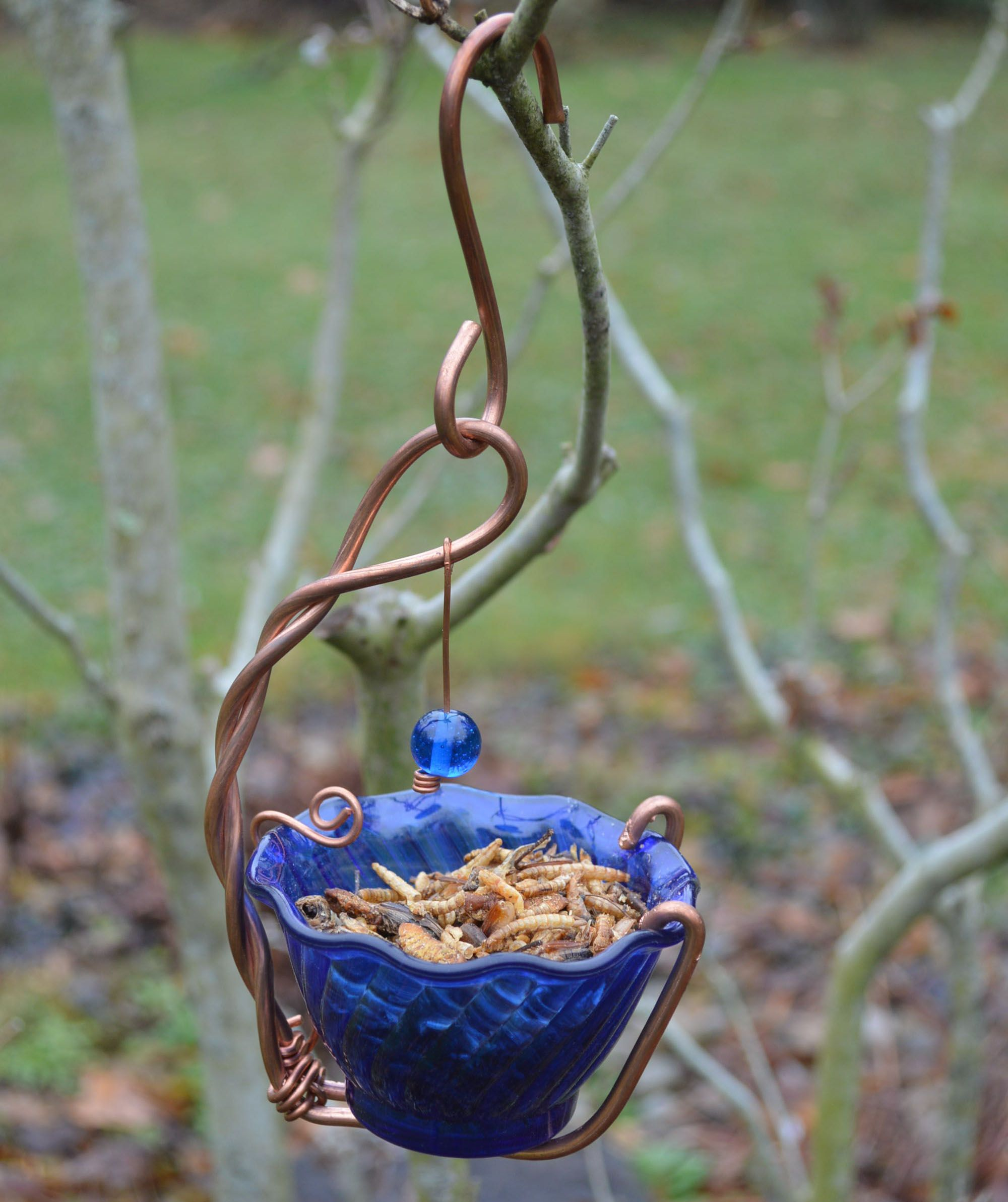 Bluebird mealworm feeder blue bird bird feeding station