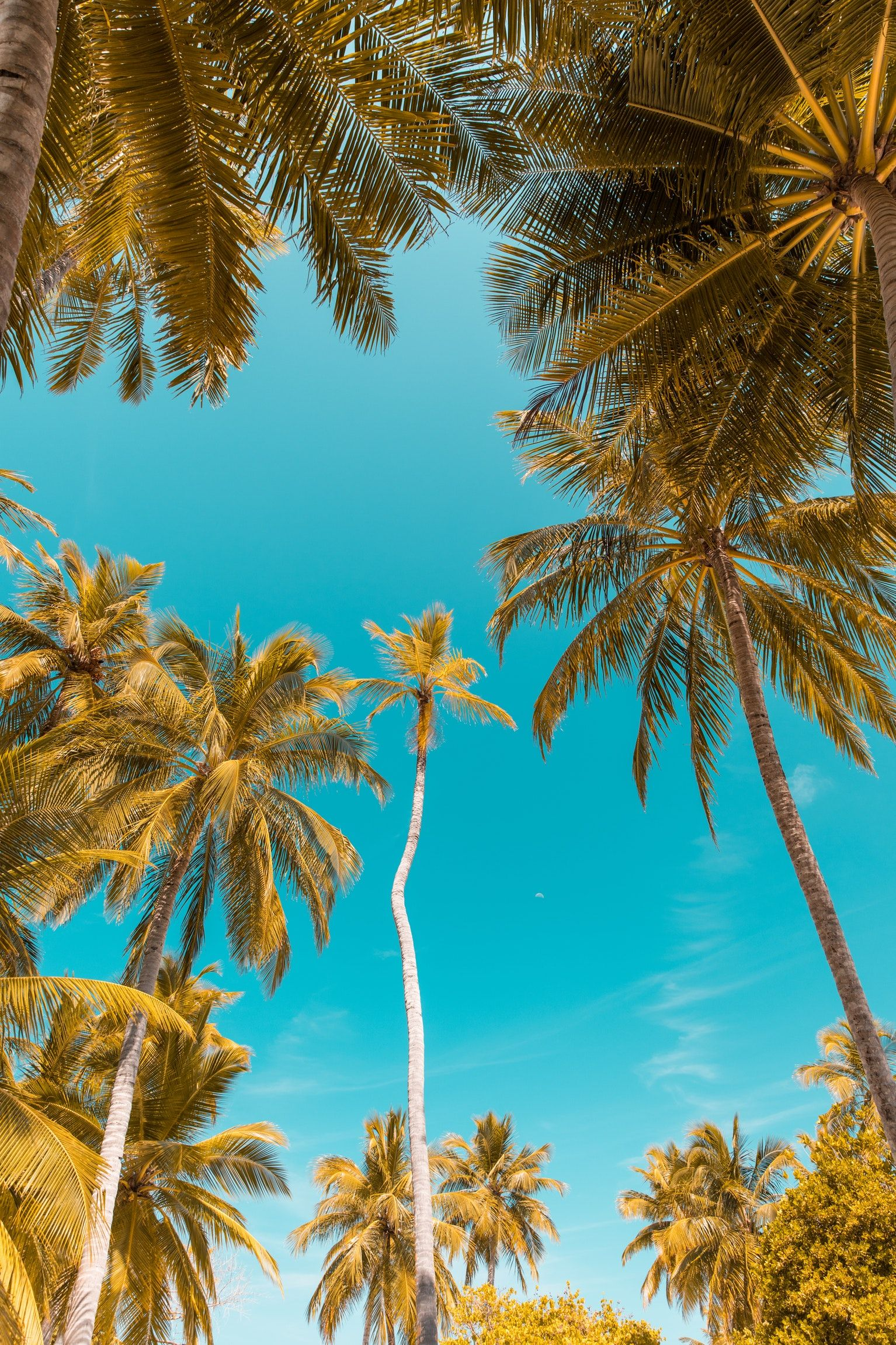 Nature And Tree Hd Photo By Mohamed Nashah Nashah On Unsplash Palm Trees Wallpaper Tree Wallpaper Iphone Beach Wallpaper Iphone