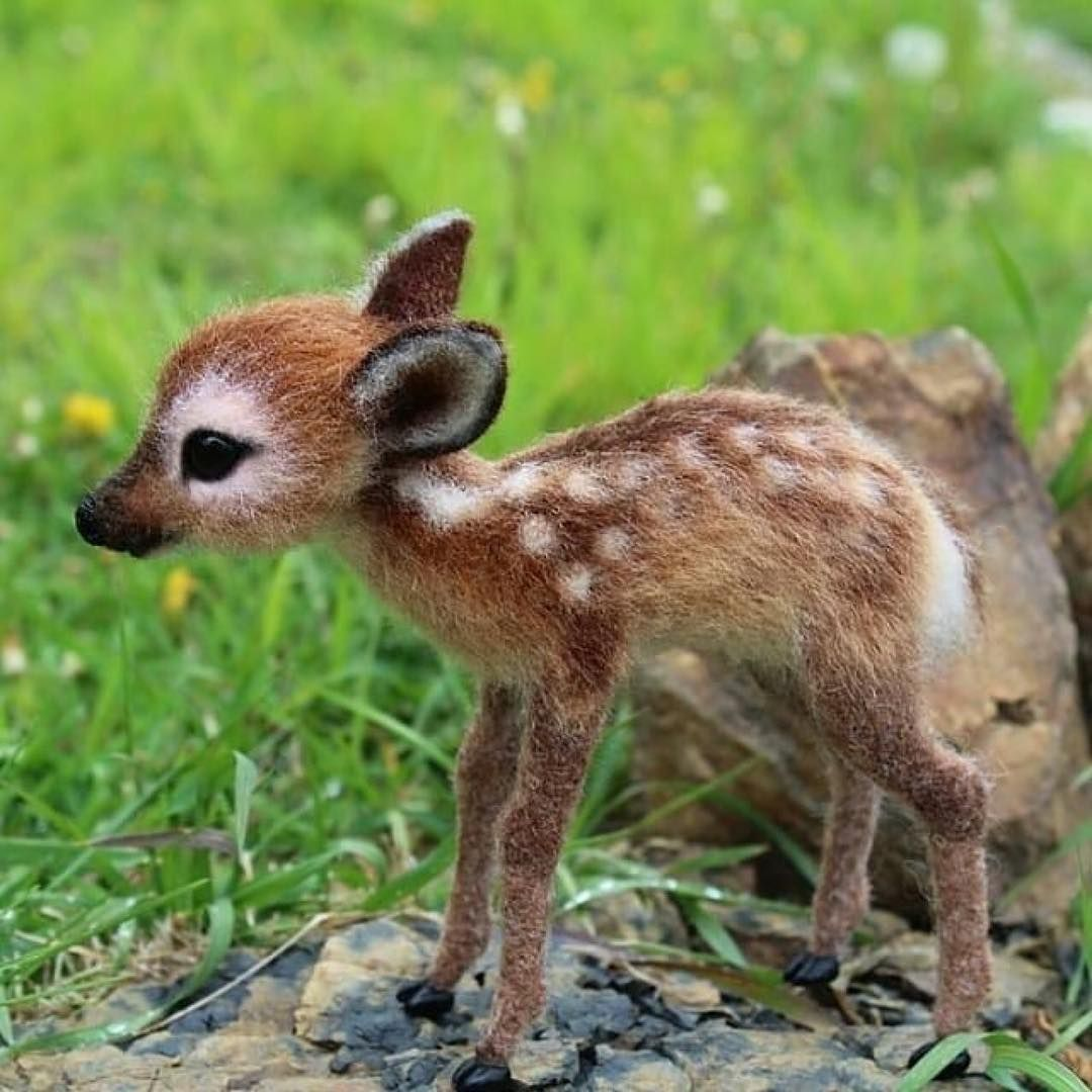 A Baby Deer Natures Follow Natures For More Dm For Credit Baby Animals Funny Cute Animals Cute Little Animals