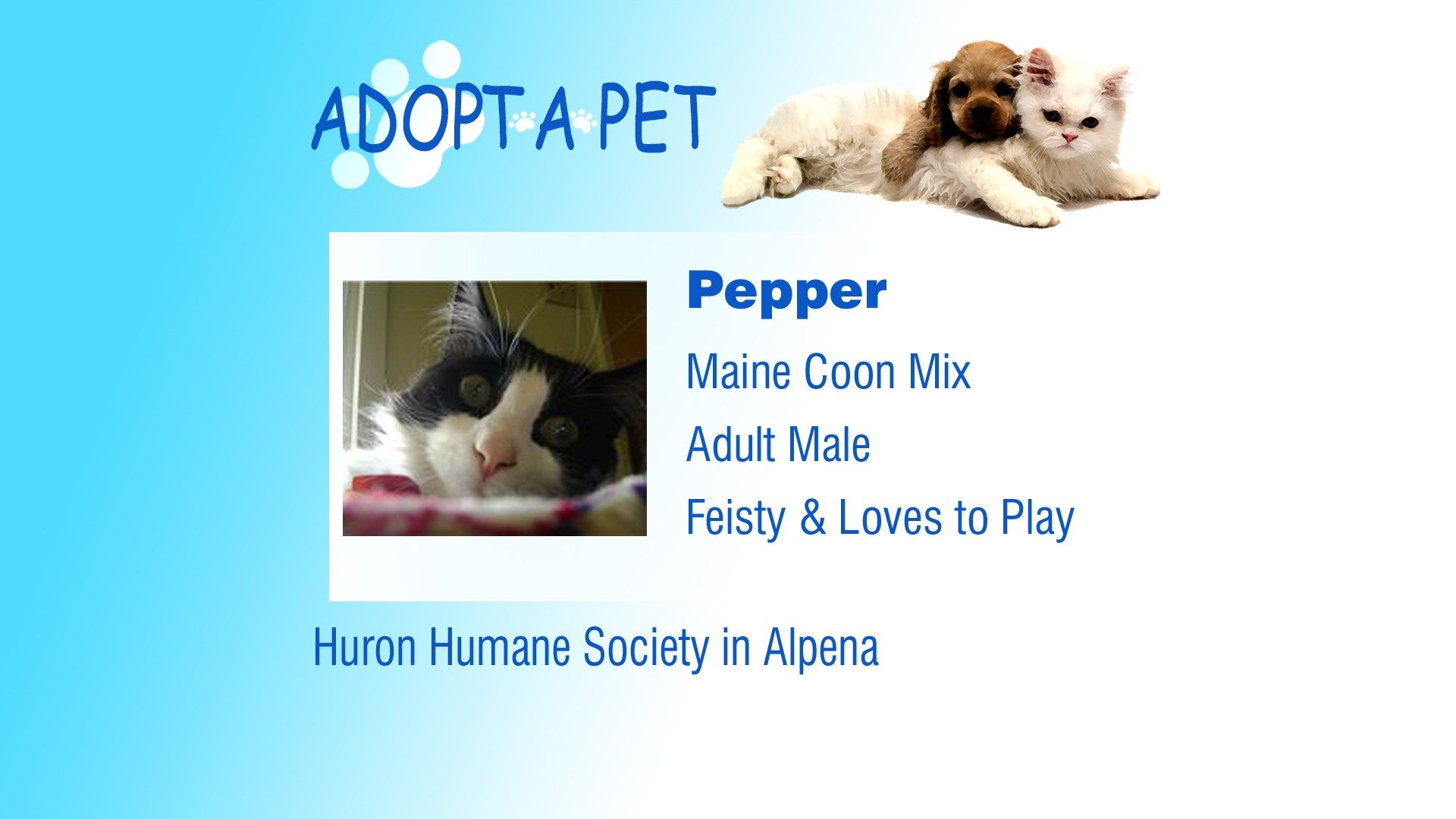 Adopt a Pet Tuesday Carl, Odie, Pepper Pets, Animal