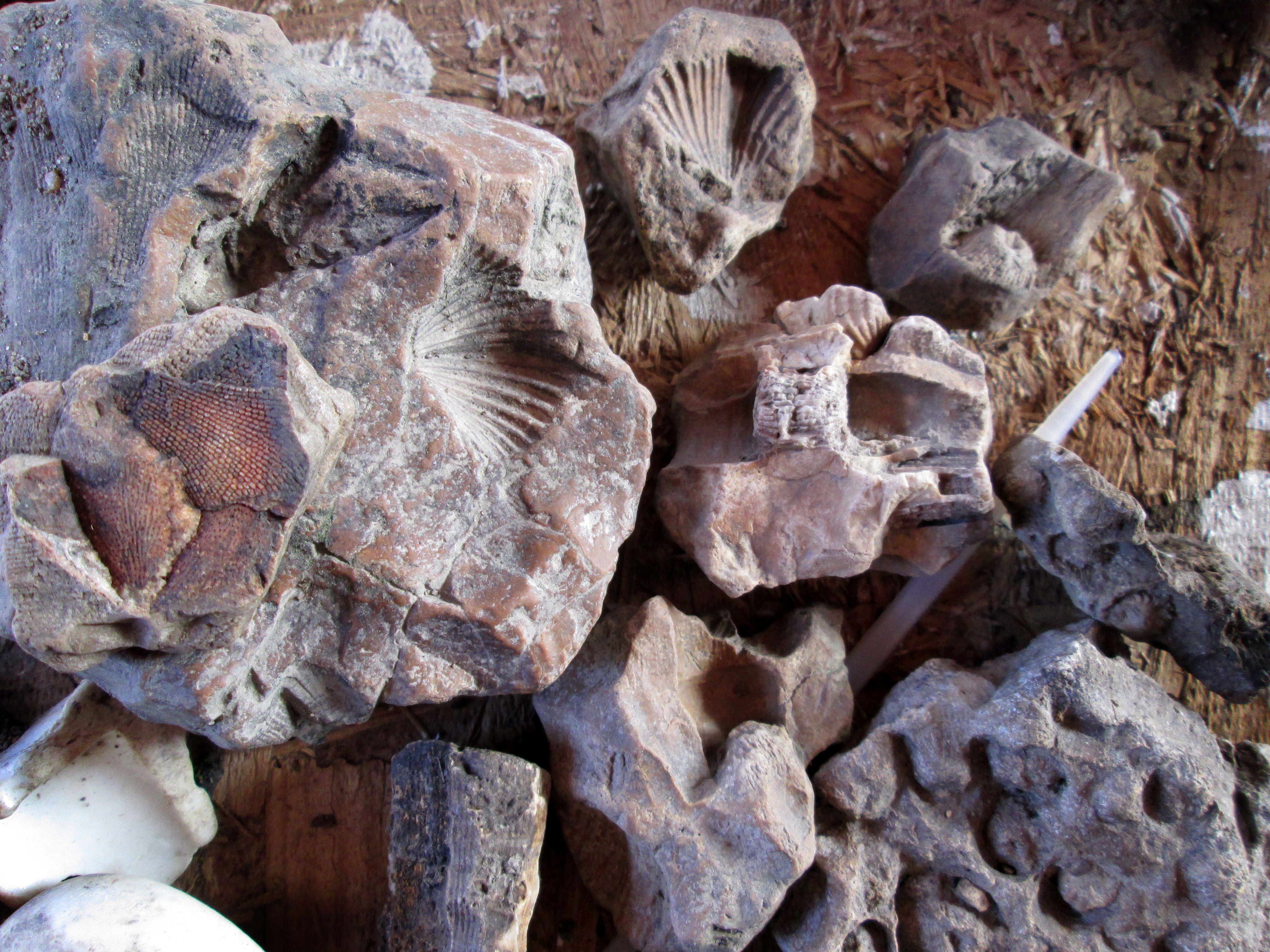 Missouri Creek Fossils Photo Monte Landsi Fossils, Rock