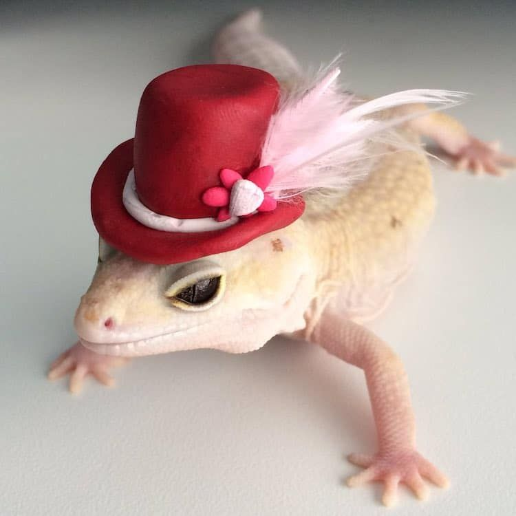 Woman Discovers Her Pet Chameleon Will Hold Anything She Hands Her Cute Lizard Cute Reptiles Leopard Gecko Cute