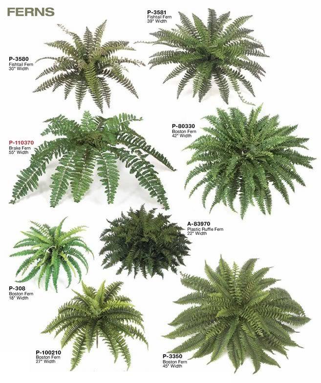 5 planters indoor terrarium different kinds of indoor for Different kinds of plants