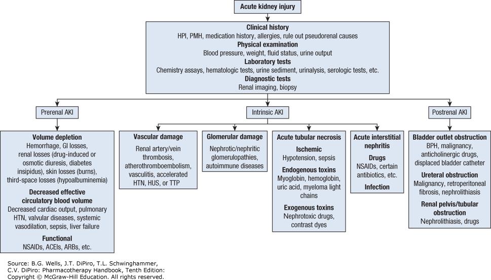 Image Result For Acute Interstitial Nephritis Vs Acute Tubular