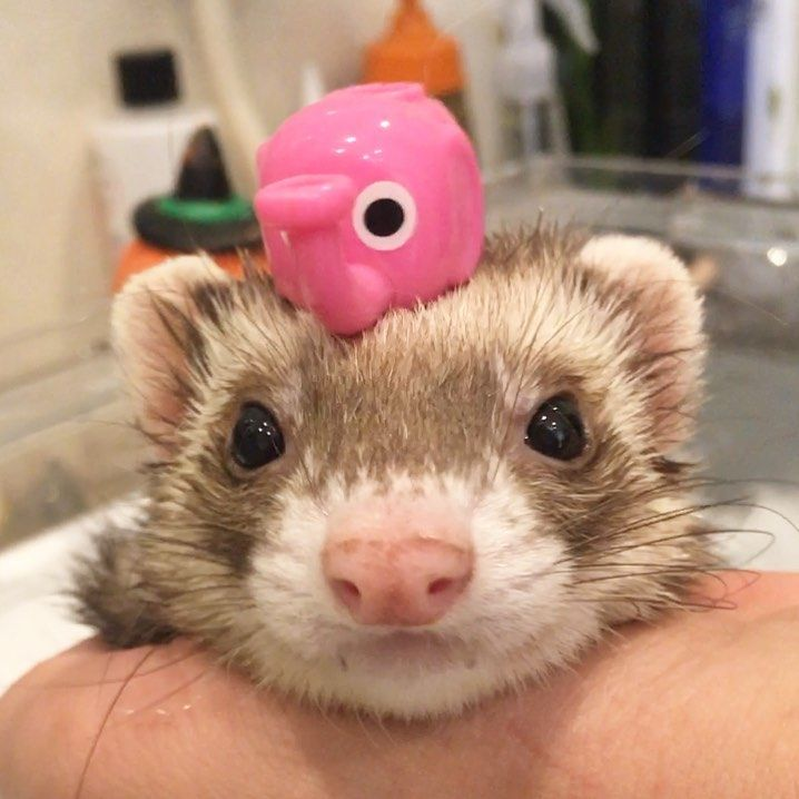 What can I bathe my ferret with?