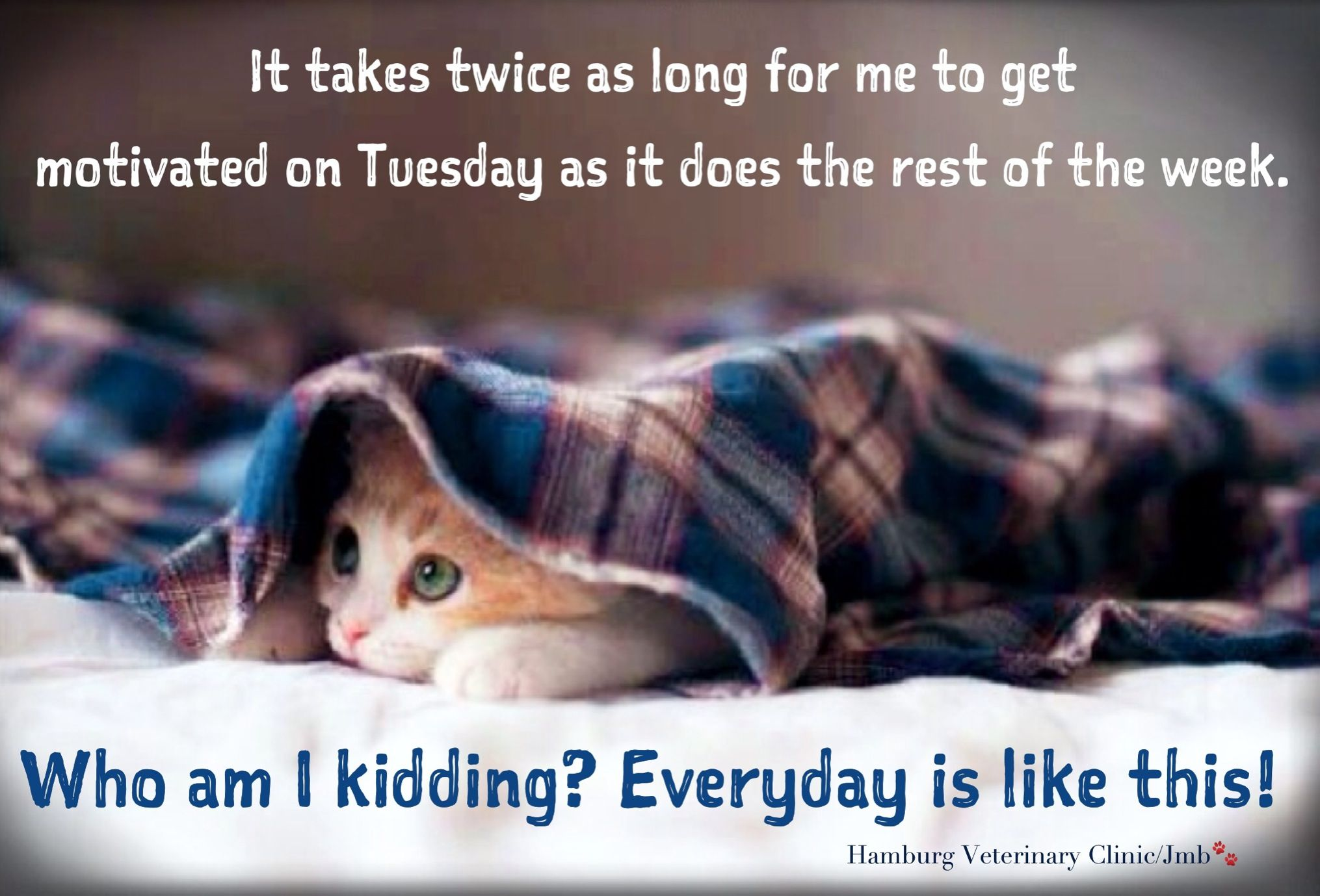 Tuesday Humor Animal Funny Cute Cat Work Week Exhausted Already Need Motivation For The Rest Of The Week It Tuesday Humor Funny Thoughts Life Humor