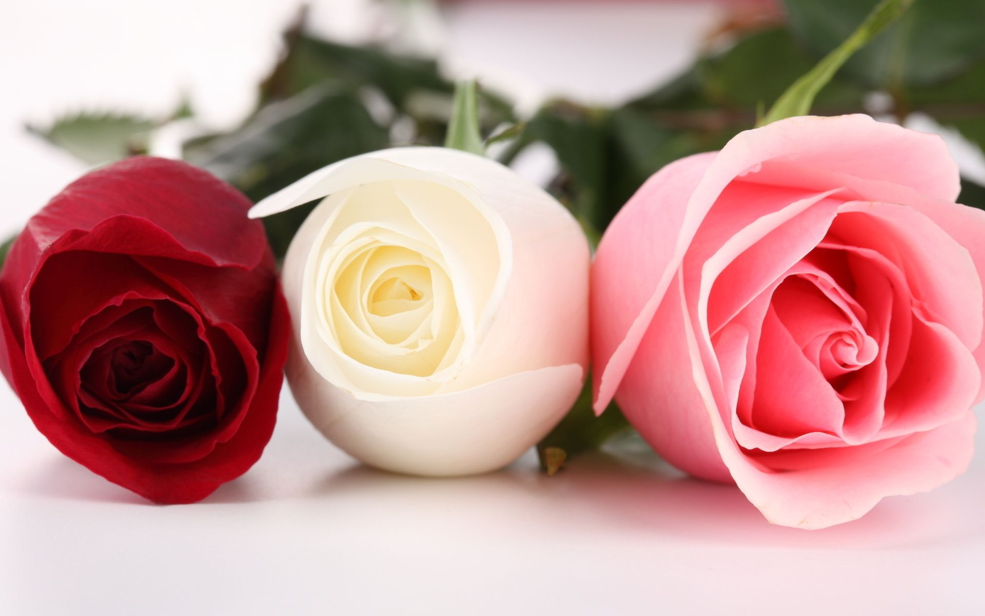 Pink And Red Roses Wallpaper White Hd Wallpapers Flower Pictures