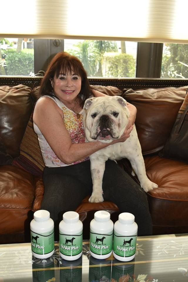 English Bulldog Skin Problems Canine Skin Issues And Remedies