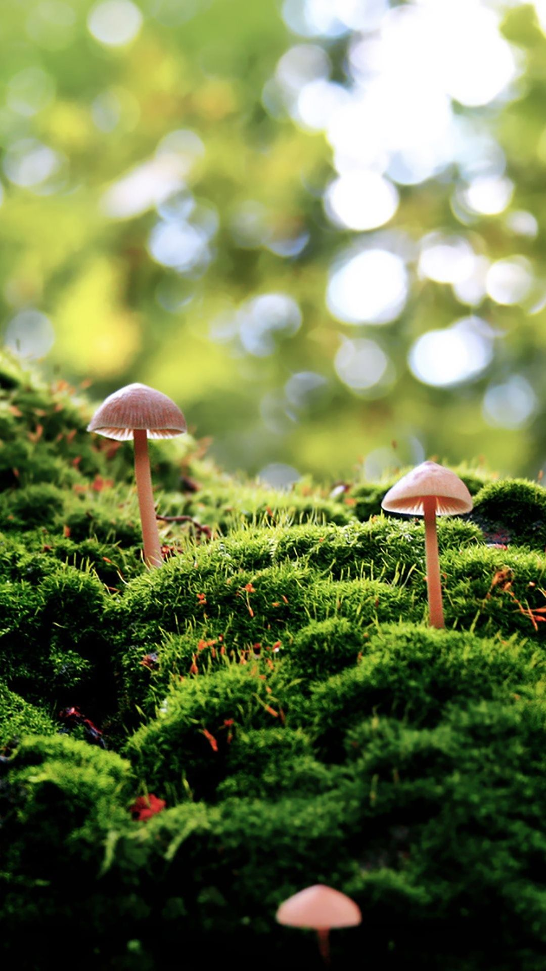 Tap And Get The Free App Nature Mushrooms Green Wood Forest Eco Blurred Hd Iphone 6 Plus Wallpaper Mushroom Wallpaper Stuffed Mushrooms Green Nature