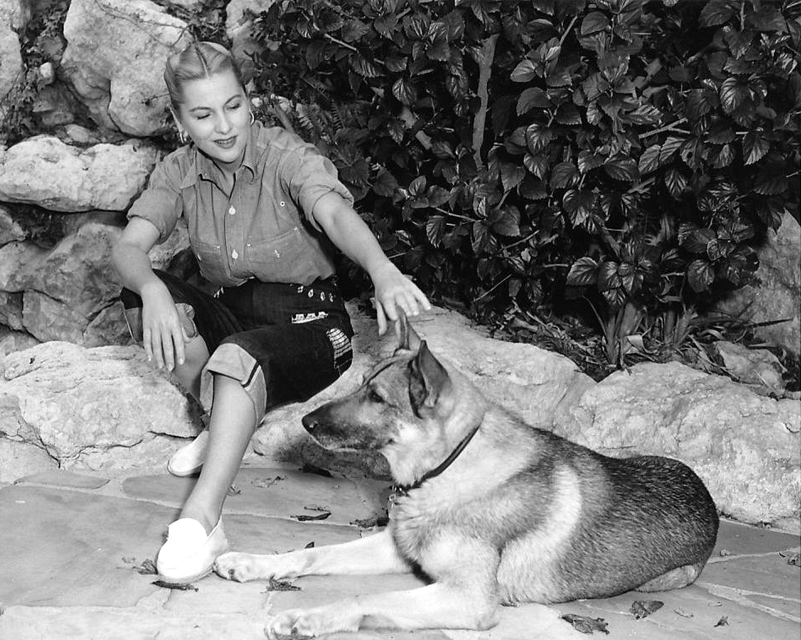 Joan Fontaine Gsd German Sheperd Dogs Celebrity Dogs Gsd Dog