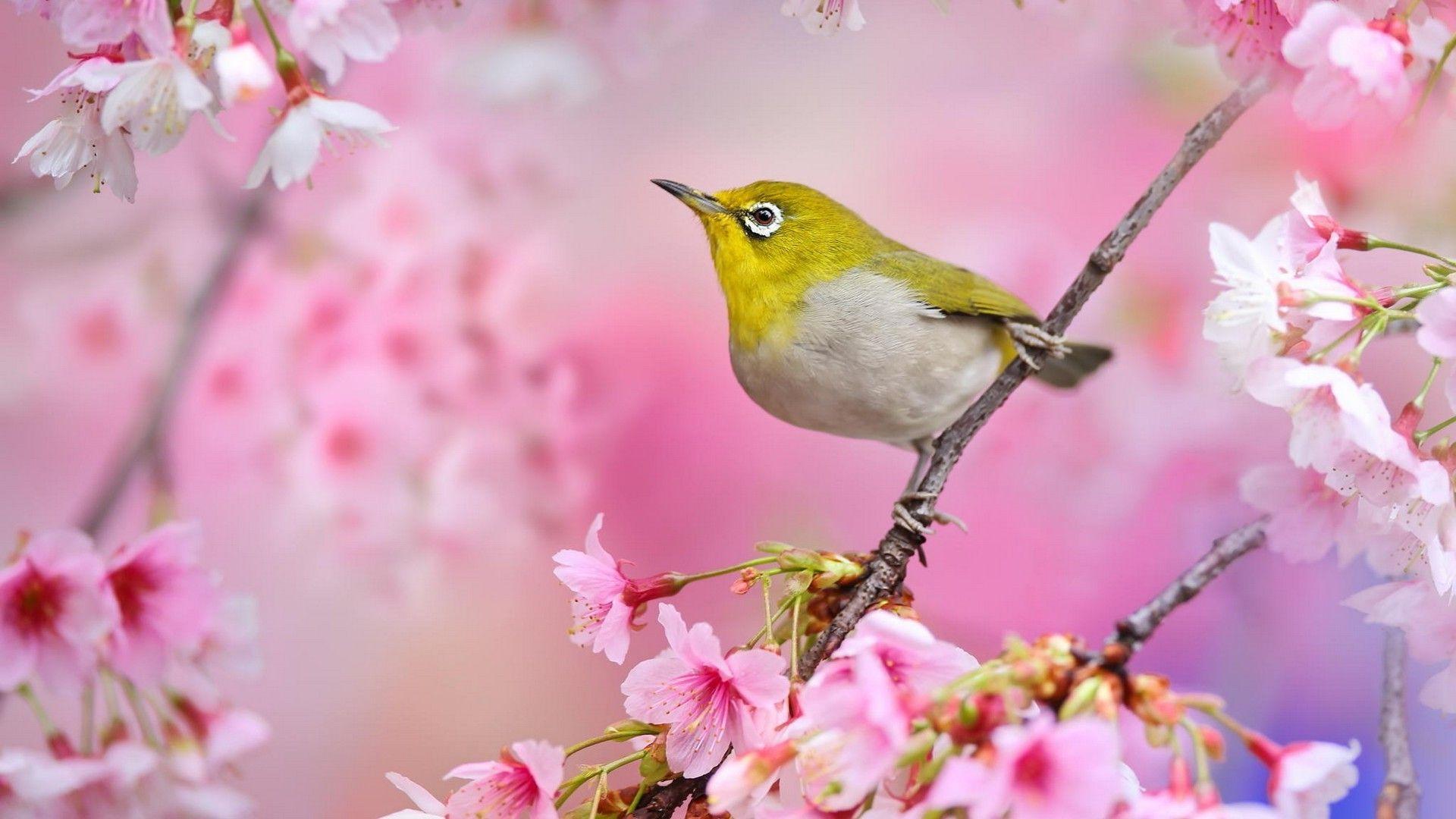 Pink Flower Green Bird Wallpaper Best HD Wallpapers