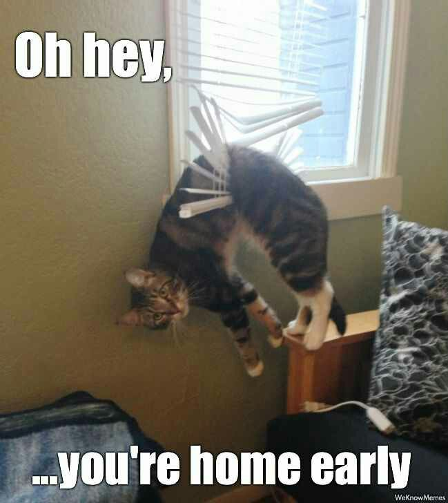 Funny cat memes / pictures