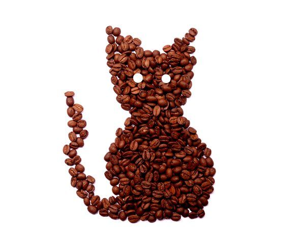 Pussy cat, pussy cat, where have you bean...?