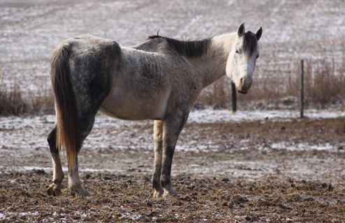 What's the Best Way to Feed a Starved or Malnourished Horse?
