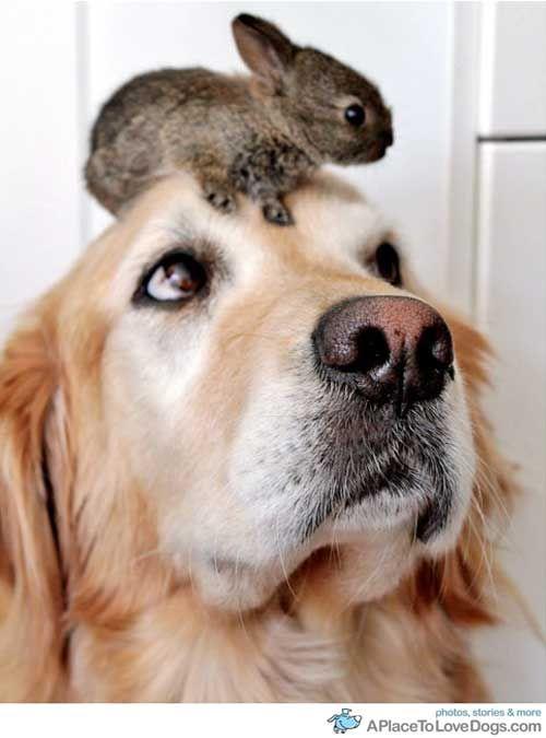 Dog and bunny.