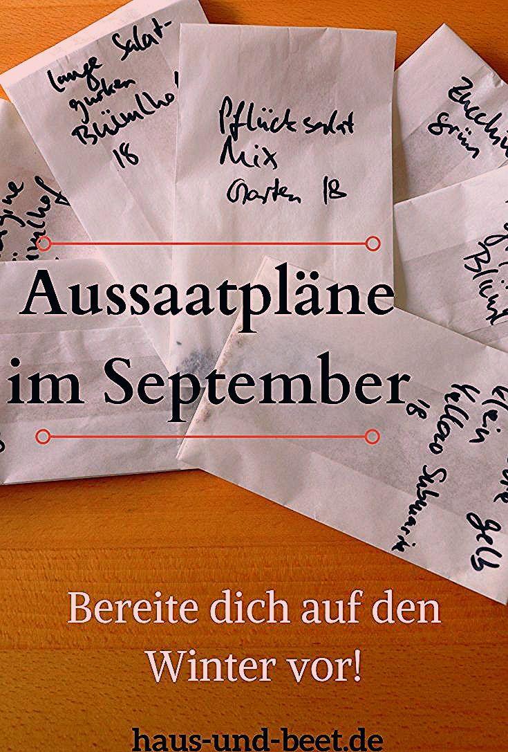 Photo of Aussaatpläne im September: Bereite dich auf den Winter vor! – Haus und Beet