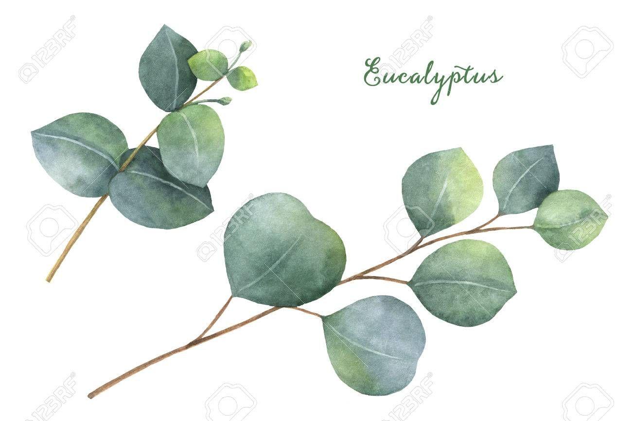 Stock Photo Leaf Clipart Floral Illustrations Paint Set