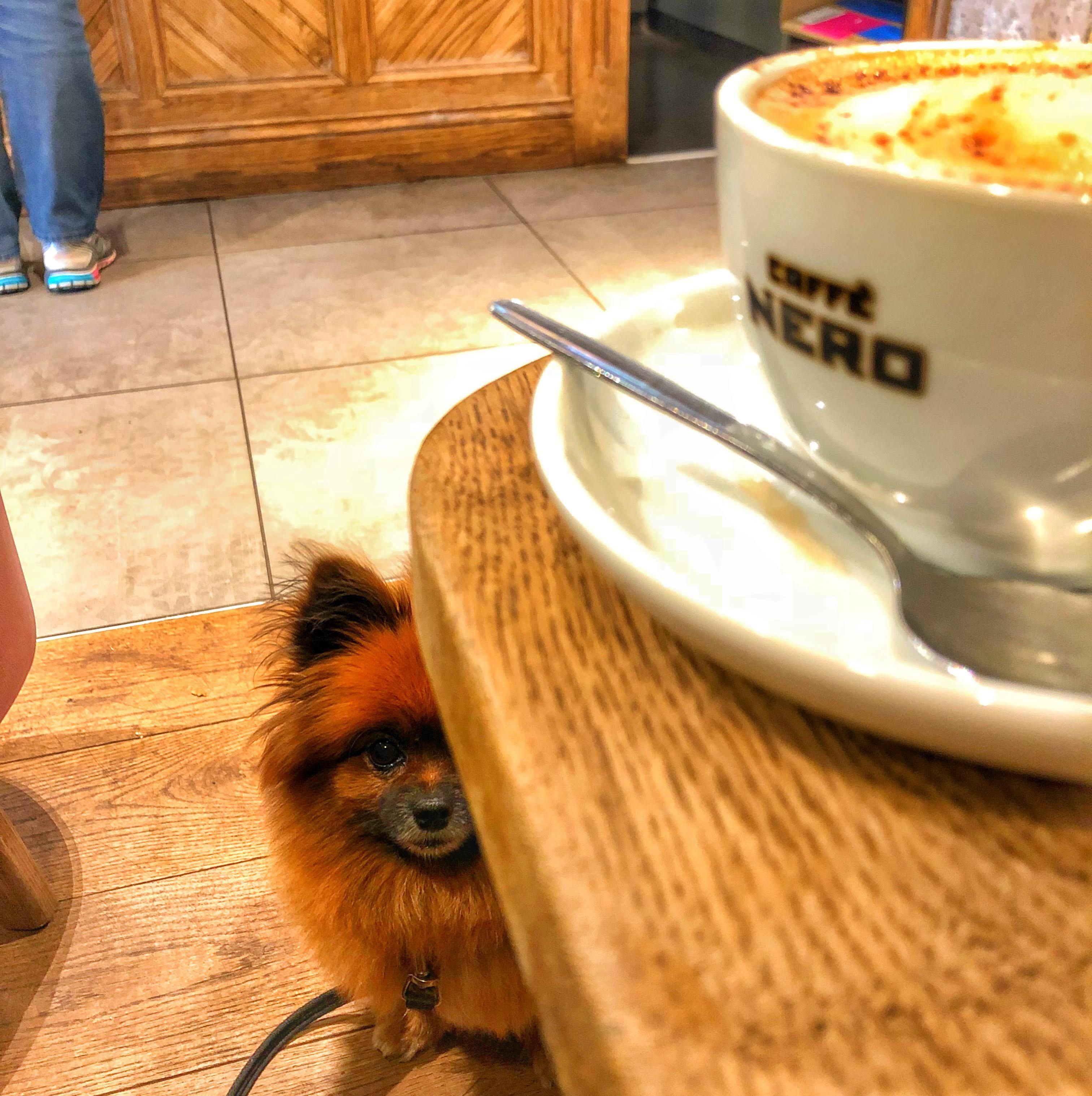 Ireland S First Dog Friendly Chain Dog Friends Caffe Nero Caffe